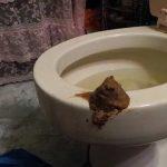Toilet cunt crazy pervert